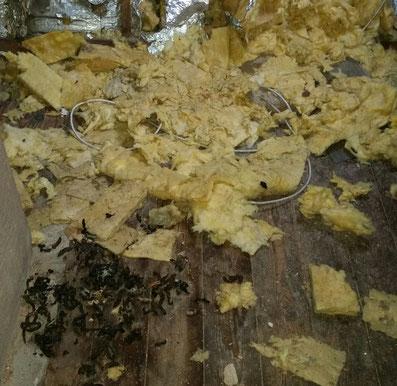 Marderschaden Dachboden